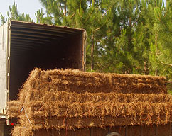 buy wholesale pine straw by the truckload