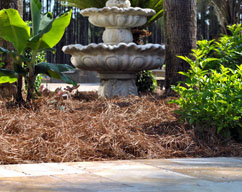 pine needle straw as organic mulch