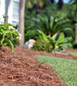 Many uses for pine straw; pine straw isn't just for landscaping